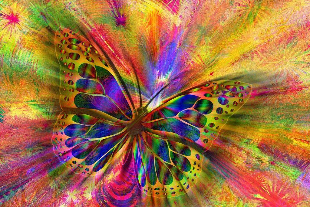 arrangement, butterfly, aesthetics